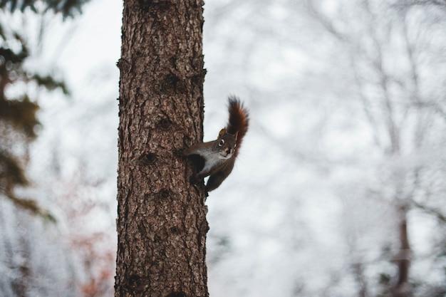 Kleines eichhörnchen am baumstamm
