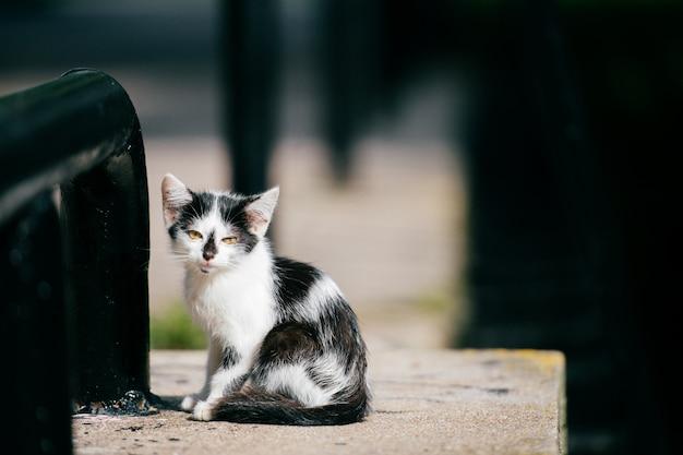 Kleines flüchtiges städtisches obdachloses kätzchen, das am straßenrand an der stadtbrücke sitzt und sich umschaut. pelzige landstreicher süße katze im freien. verlorenes hungriges haustier, das nach haus und nahrung sucht.