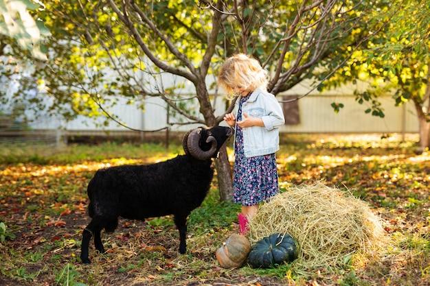 Kleines gelocktes blondes mädchen, das schwarze hausschafe einzieht. farmer's life-konzept
