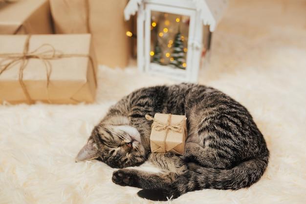 Kleines getigertes kätzchen schlafend mit kleinem geschenkbox-weihnachtsgeschenk mit bogen neujahr und heiraten weihnachten