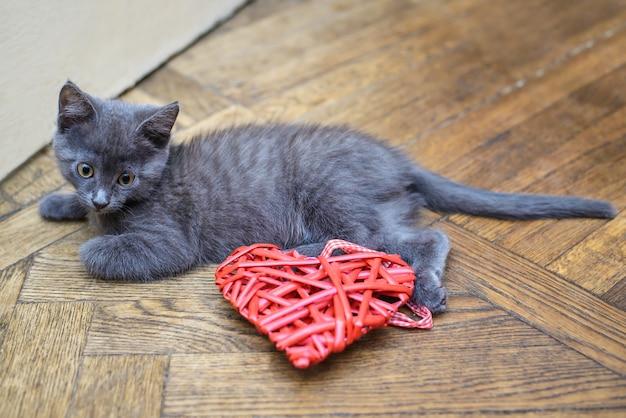Kleines graues kätzchen, das auf dem boden nahe bei einem dekorativen herzen liegt