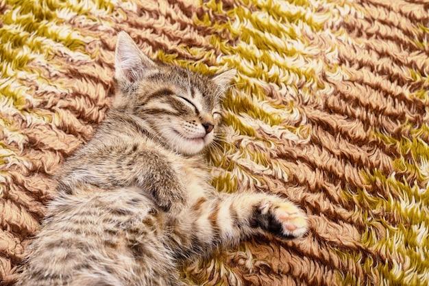 Kleines graues kätzchen, das auf textil dargestellt