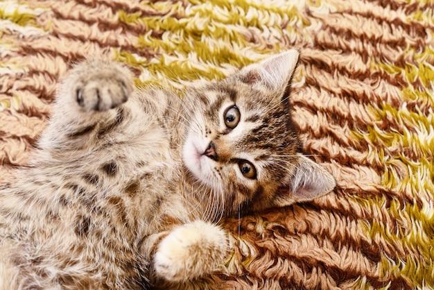 Kleines graues kätzchen, das auf textilhintergrund darstellte