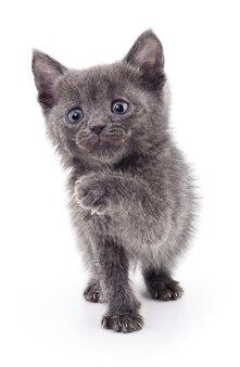 Kleines graues kätzchen lokalisiert auf weiß