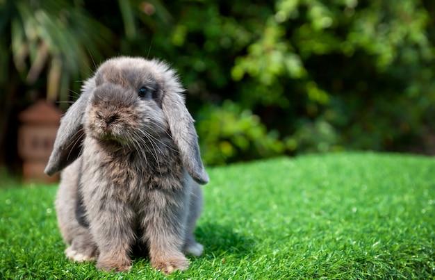 Kleines graues kaninchen auf grünem gras im garten.