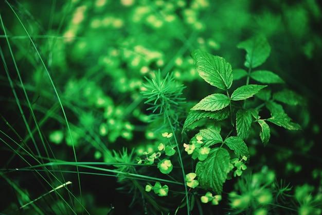 Kleines grün lässt beschaffenheit im wald. wilde natur. sommer-konzept. kopieren sie platz. banner. weicher fokus.