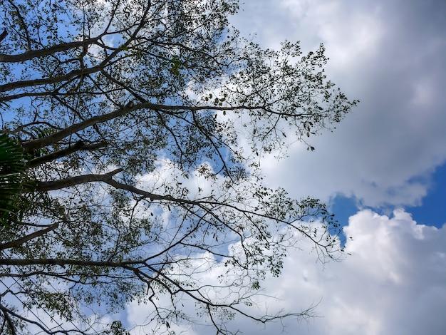 Kleines grün verlässt auf niederlassung des baums auf blauem himmel mit wolkenhintergrund