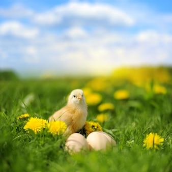 Kleines huhn und ei auf dem gras im sommertag