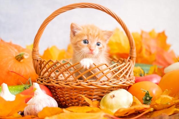 Kleines ingwer-kätzchen sitzt in einem korb