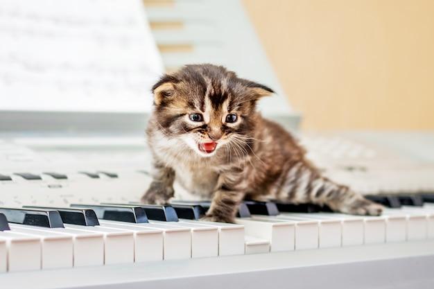 Kleines kätzchen auf klaviertasten. berufsmusik und gesang. ein kleines kätzchen schreit
