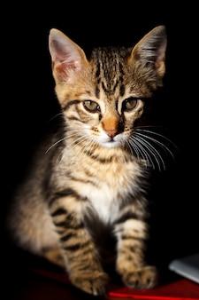 Kleines kätzchen auf schwarzem