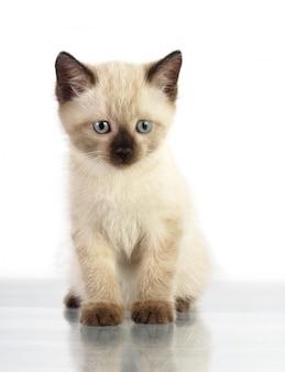 Kleines kätzchen auf weißer wand