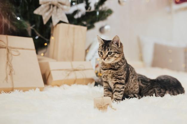 Kleines kätzchen, das neben einer geschenkbox sitzt