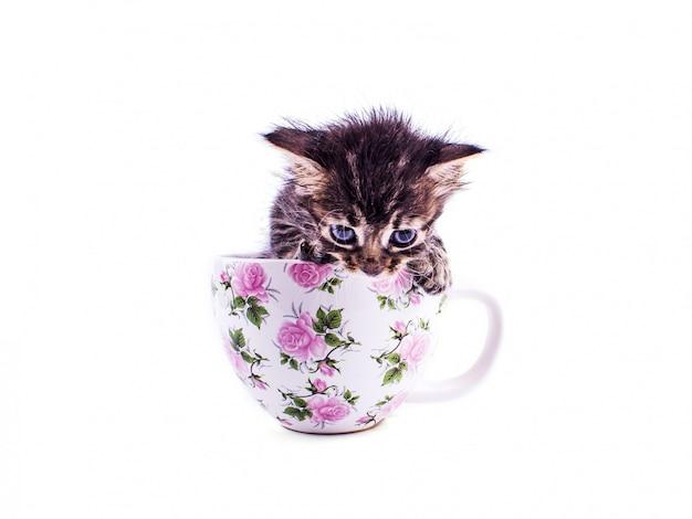 Kleines kätzchen der getigerten katze in einer großen weißen schale
