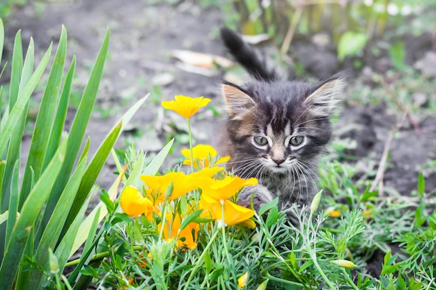 Kleines kätzchen im garten nahe gelben blumen