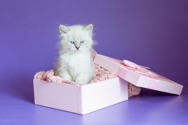Kleines kätzchen in einer box auf lila hintergrund