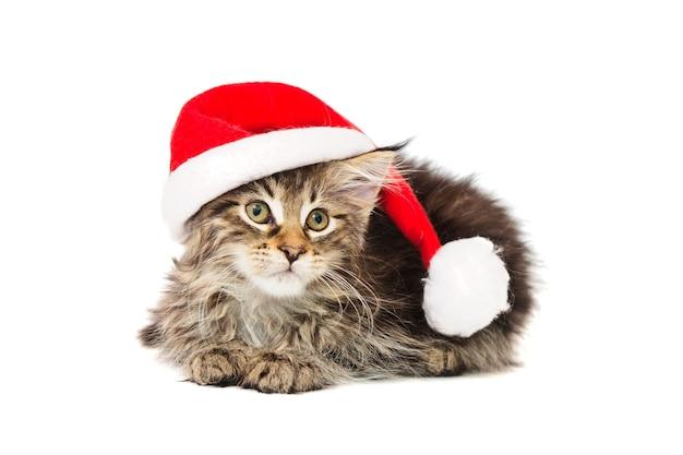 Kleines kätzchen in santa christmas red hat auf weißem hintergrund