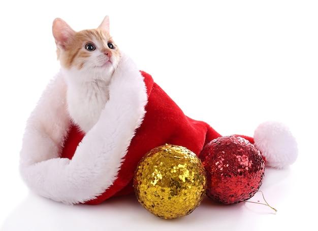 Kleines kätzchen in weihnachtsmütze isoliert auf weiß