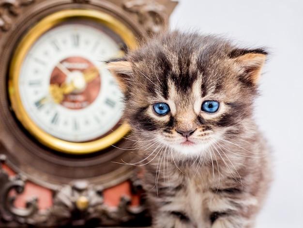 Kleines kätzchen mit blauen augen nahe der uhr. beginn eines neuen tages