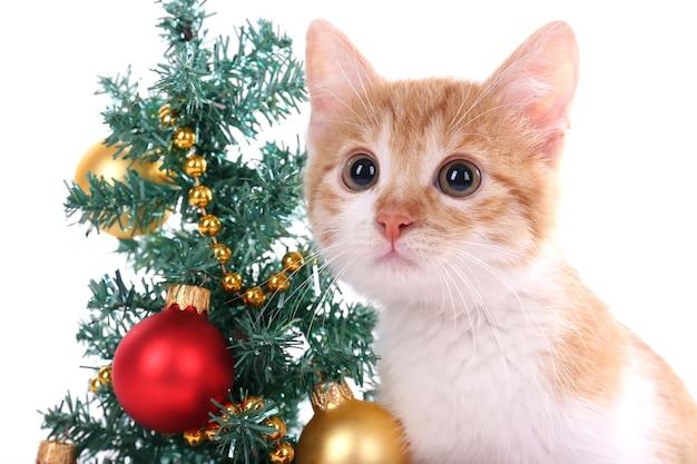 Kleines kätzchen mit weihnachtsschmuck isoliert auf weiß