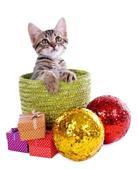 Kleines kätzchen mit weihnachtsschmuck isoliert auf weißer oberfläche