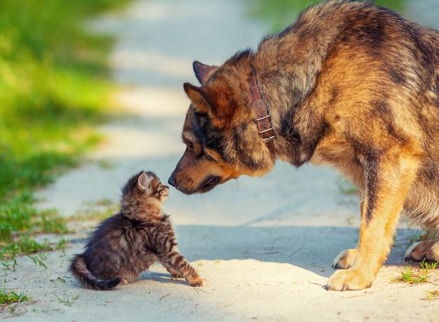 Kleines kätzchen und großer hund