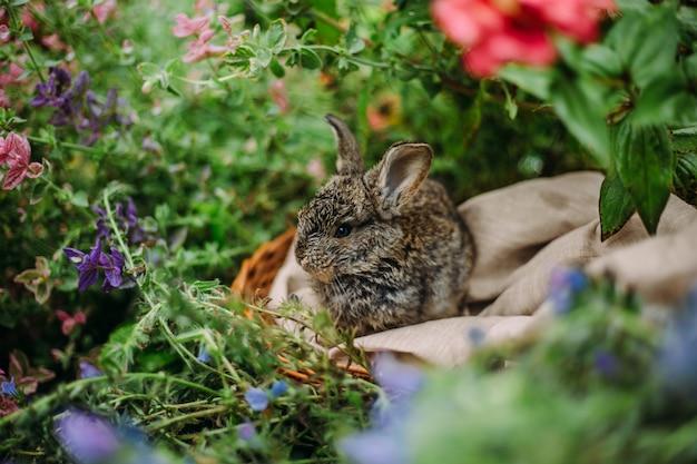 Kleines kaninchen auf grünem gras am sommertag. kleines zwergkaninchen, das nahe blumen sitzt.