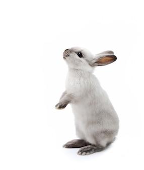 Kleines kaninchen auf weiß