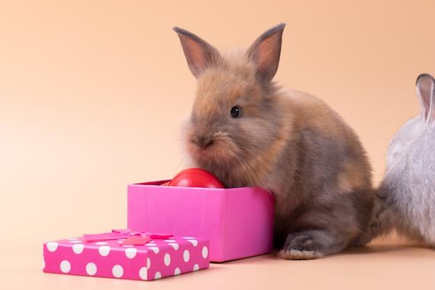 Kleines kaninchen, das auf lokalisiertem rosarosenhintergrund mit geschenkboxherzform am studio sitzt