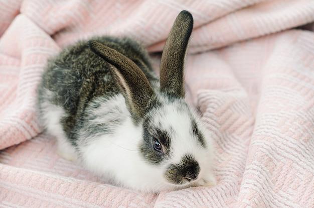 Kleines kaninchenbaby