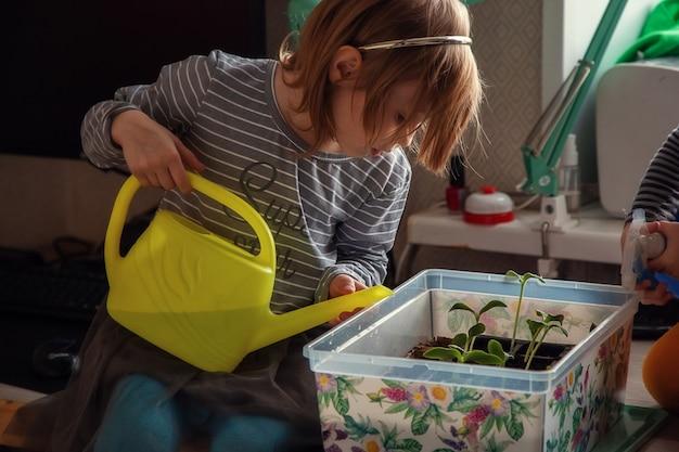 Kleines kaukasisches mädchen 5 jahre alt, das sämlinge von einer sprühflasche gießt, während auf einem tisch sitzend, sämlinge für das pflanzen in einem gewächshaus vorbereitend