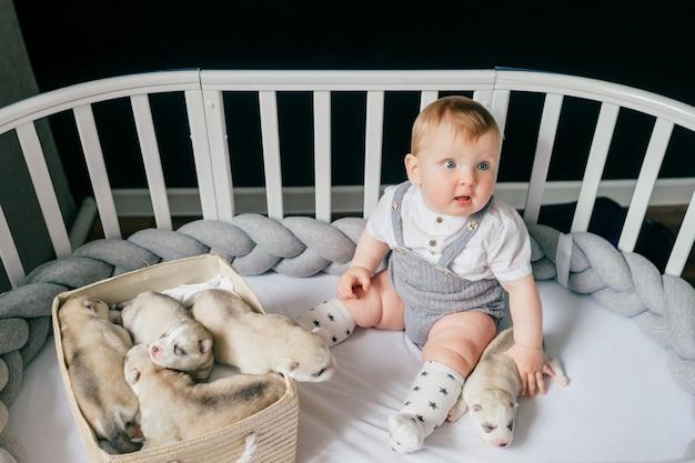 Kleines kind, das in krippe mit neugeborenen huskywelpen sitzt.