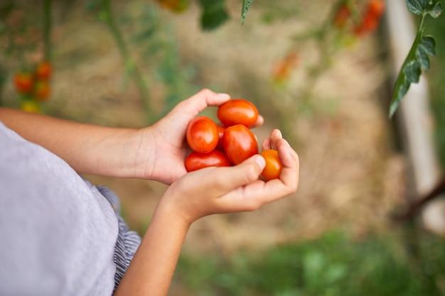 Kleines kindermädchen hält in der hand ernte von organischen roten tomaten zu hause im garten
