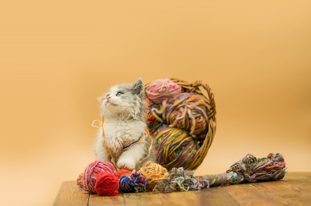 Kleines lustiges kätzchen nahe bei einem ball des garns