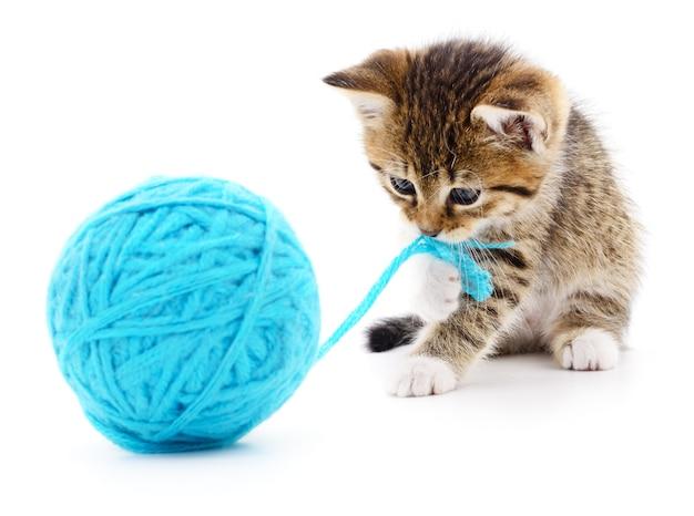 Kleines lustiges kätzchen und fadenschlaufe isoliert