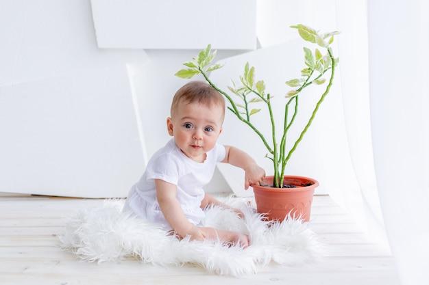 Kleines mädchen 6 monate alt, das in weißen kleidern in einer hellen wohnung am fenster mit einer raumblume, pflanzenpflegebaby sitzt