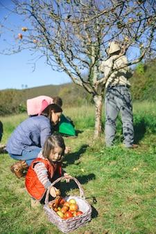 Kleines mädchen, das apfel in den weidenkorb legt und ihre familie an einem sonnigen herbsttag frische bio-äpfel pflücken. familienfreizeitkonzept.