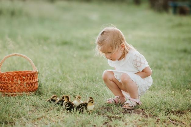 Kleines mädchen, das mit entlein spielt. mädchen bei sonnenuntergang mit schönen entenküken. das konzept der kinder mit tieren.