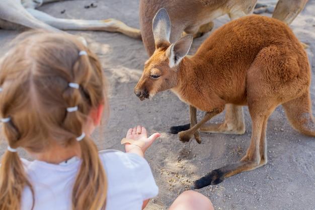 Kleines mädchen, das sich um ein australisches känguru kümmert