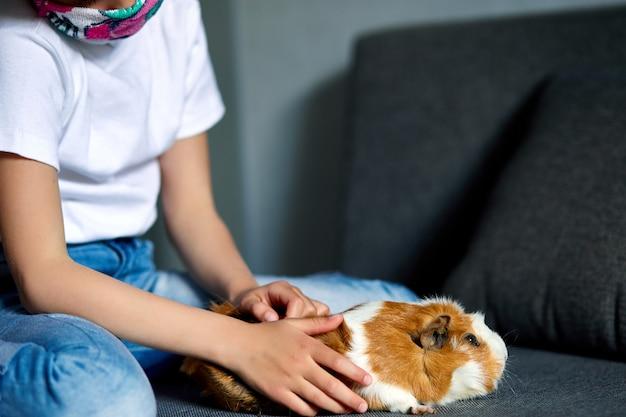Kleines mädchen in der maske, die mit rotem meerschweinchen spielt, meerschweinchen zu hause am sofa, während in quarantäne.