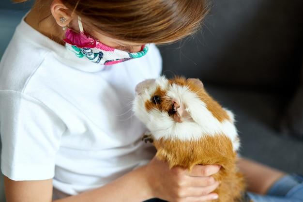 Kleines mädchen in der maske, die mit rotem meerschweinchen spielt, meerschweinchen zu hause am sofa, während in quarantäne. Premium Fotos