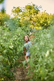 Kleines mädchen mit korb in der hand läuft durch die tomatenreihen