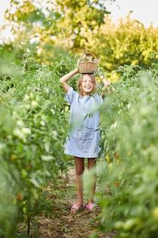 Kleines mädchen mit korb in der hand, spaß, ernte von organischen roten tomaten zu hause im garten, pflanzliche lebensmittelproduktion. tomatenanbau, herbsternte.