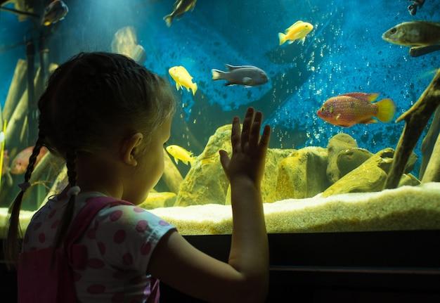 Kleines mädchen sieht fische im aquarium an