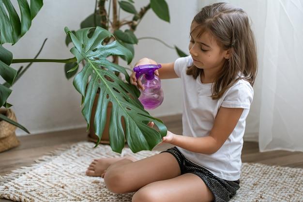 Kleines mädchen sprüht zimmerpflanzenblätter und kümmert sich um die pflanze monstera.
