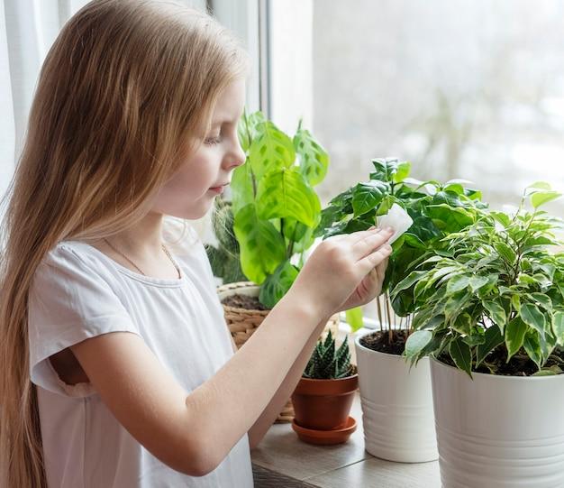 Kleines mädchen wischt die blätter von zimmerpflanzen in ihrem haus ab