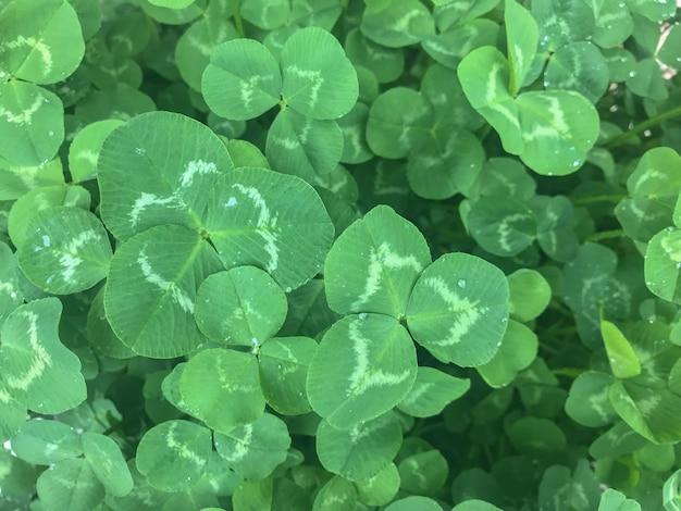 Kleines natürliches grün lässt betriebshintergrund.