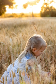Kleines nettes blondes mädchen im blauen kleid auf dem weizengebiet bei sonnenuntergang zerreißt ährchen des weizens