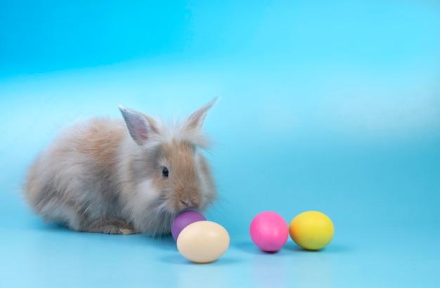Kleines nettes kaninchen auf klarem hintergrund. feiertags-ostern-konzept.