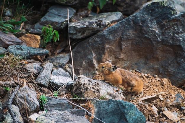 Kleines neugieriges tier auf buntem felsigem hügel
